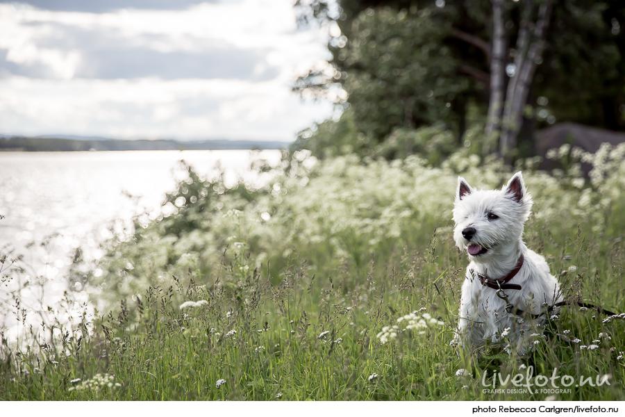 160630_jukkasjarvi_Photo_Rebecca-Carlgren_livefoto.nu_-12