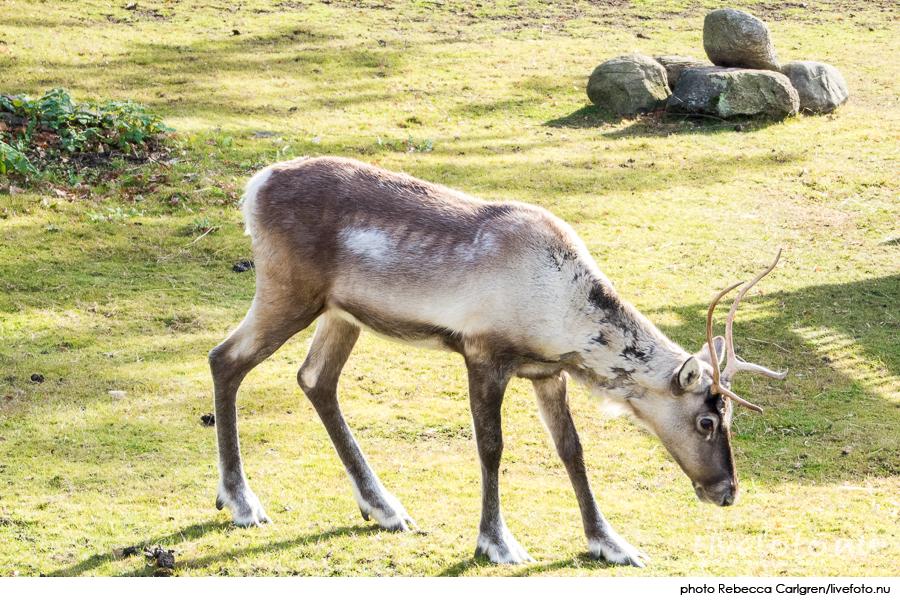 161030_slottsskogen_photo_rebecca-carlgren_livefoto-nu_-11