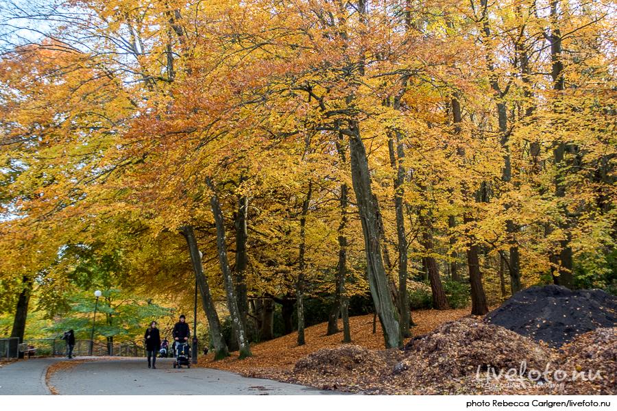 161030_slottsskogen_photo_rebecca-carlgren_livefoto-nu_-18