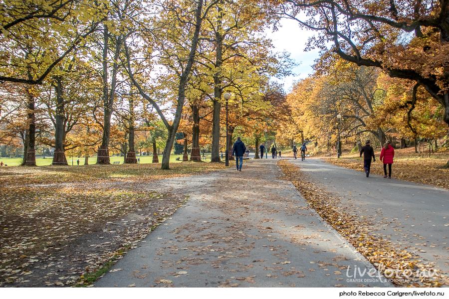 161030_slottsskogen_photo_rebecca-carlgren_livefoto-nu_-8