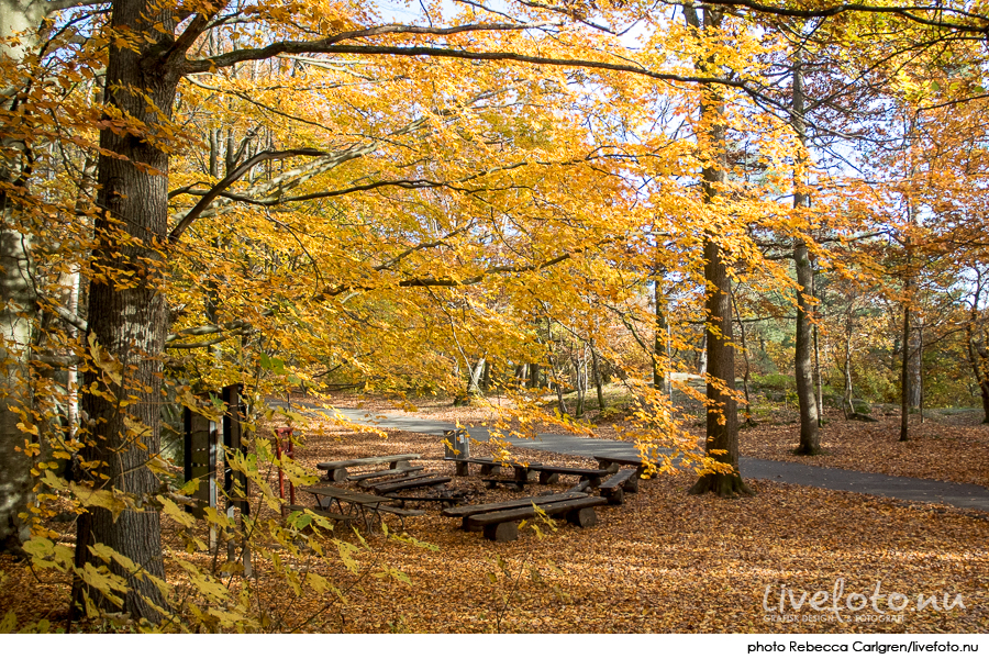 161030_slottsskogen_photo_rebecca-carlgren_livefoto-nu_-9